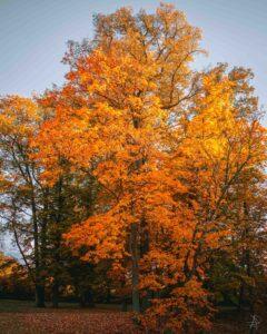 Attack of the orange colour